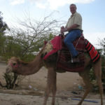 Four Lessons Leaders Can Learn From Camels