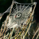 What Leaders Can Learn from Spiders