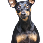 Using The Big Ears Approach to Listen Better Naturally!